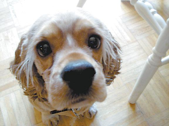 Bailey Face