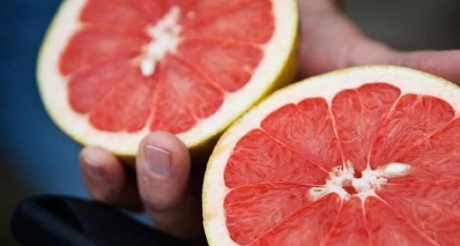Ocean Spray grapefruit harvest