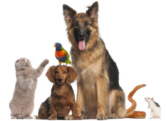 pets pet products