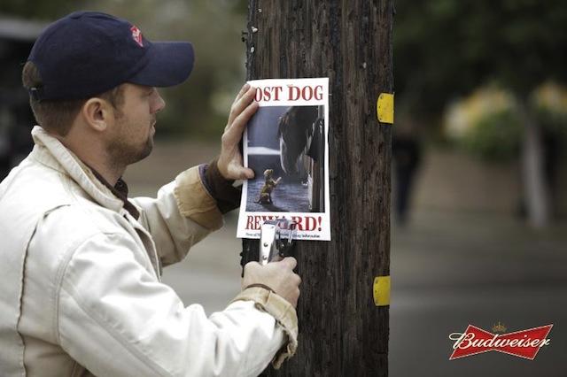 Anheuser-Busch - Super Bowl - Ad Lineup - Budweiser Lost Dog
