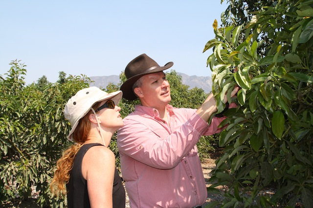 At the California Avocado Commission demonstration grove, CAC's Research Program Director Dr. Tim Spann explains the growth cycle of avocado trees to a visitor.