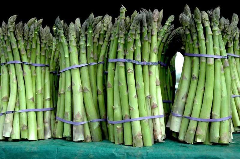 Michigan asparagus season