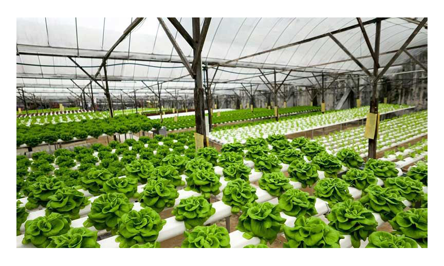 Inside the Wellspring greenhouse