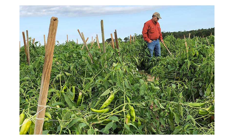A Georgia farmer standing in a damaged crop.