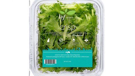 lef farms lettuce