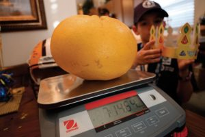 Louisiana grapefruit, World Record