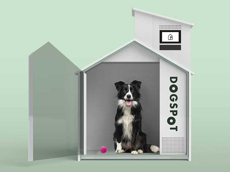 DogSpot dogs