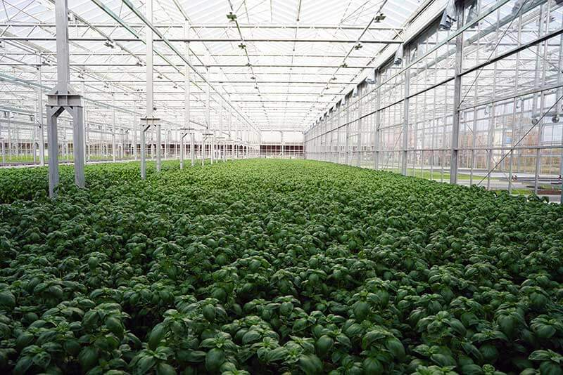 Gotham Greens Opens New Greenhouse In Providence, Rhode Island