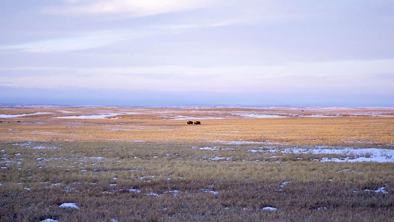 Tanka Niman Ranch