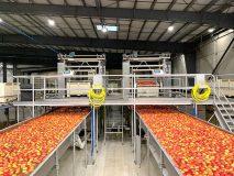 Allan Bros. Rainier Fruit packing line 2