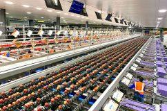 Allan Bros. Rainier Fruit packing line 3