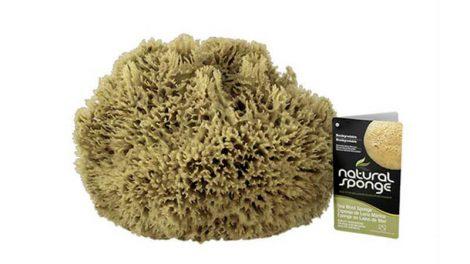 Armaly sponge