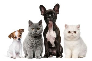 Packaged Facts, pet industry, survey, Covid-19