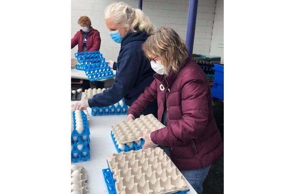 Dutch Farms, egg donation