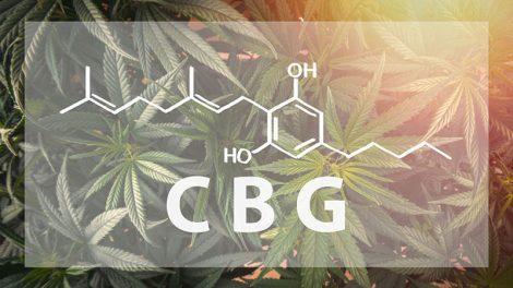 Panacea CBG cannabinoids