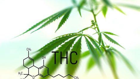 Panacea THC hemp