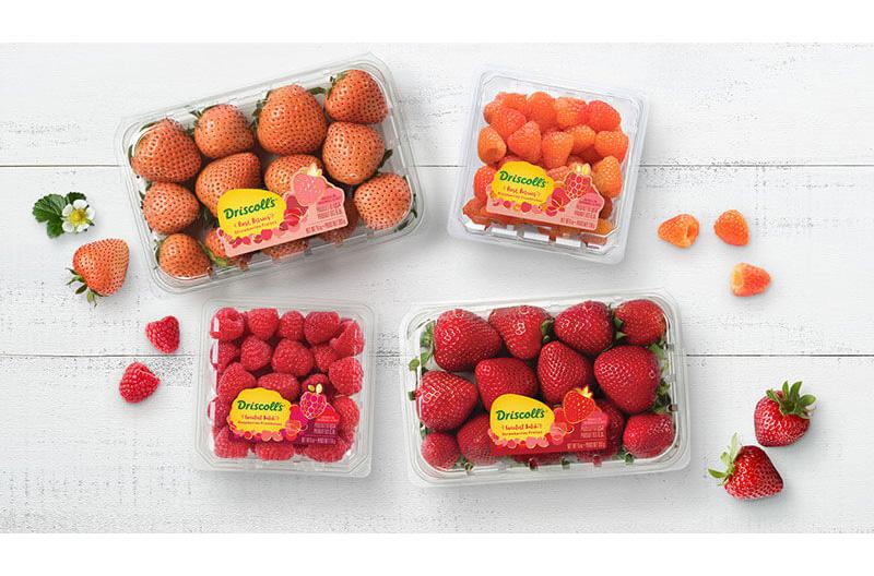 Rosé Berries