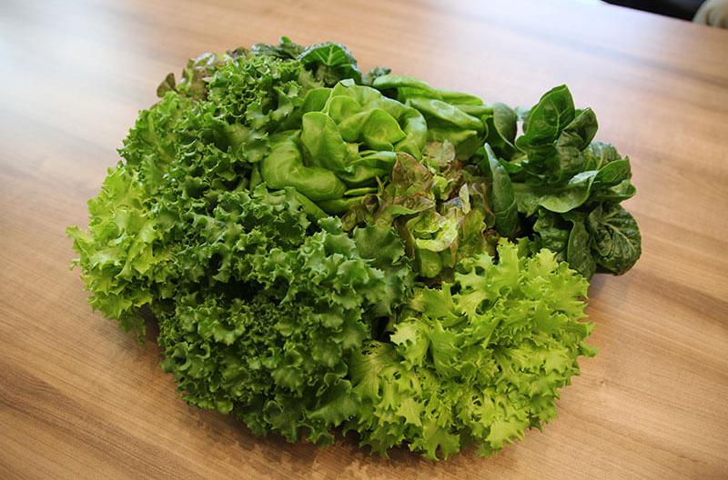 lettuce GmbH